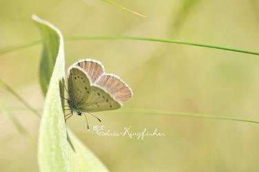 Hello My Little Sweet Pea by Edris-Kingfisher