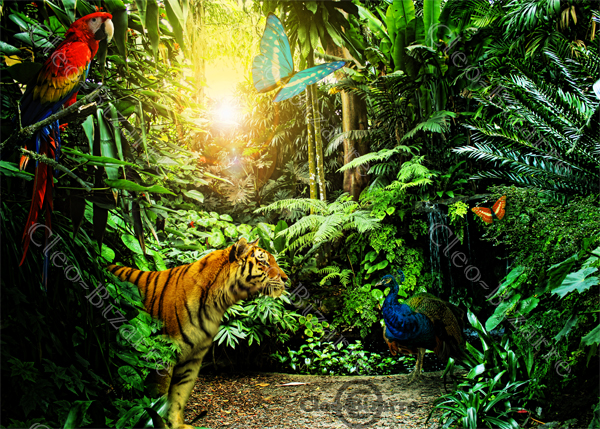 The Jungle by Cleo-Bizarre