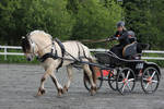 Horse driving 4