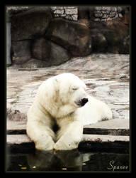 SLEEPING WHITE BEAR by Spanee