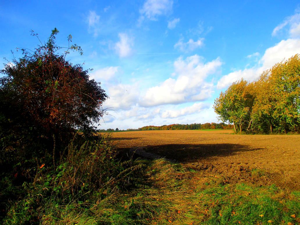 Wide Fields in the Autumn Wind