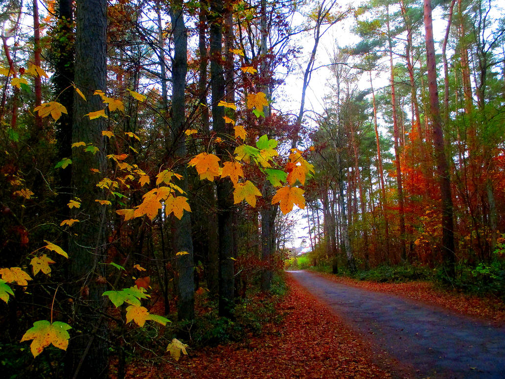 The Old Forest Road