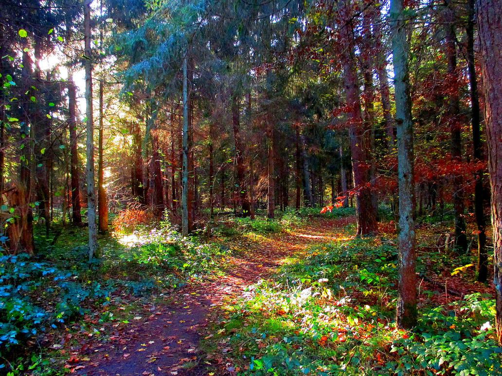 Ancient forgotten paths