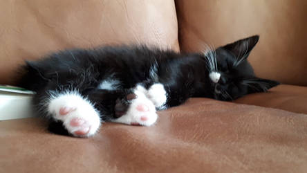Little Fritzchen: Little Nap
