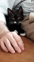 Little Fritzchen: Courious and Cuddly