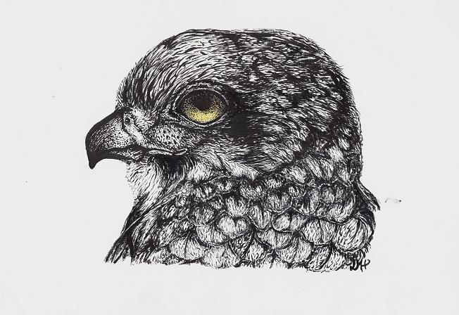 Falcon - Brush Pen by LittleGreenSpirit