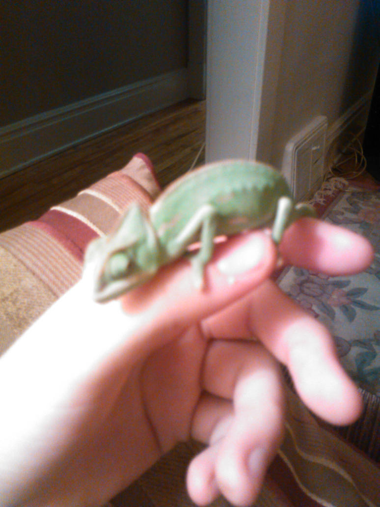 i miss my chameleon, mint by countrygirllover