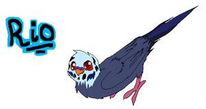 Rio the parakeet