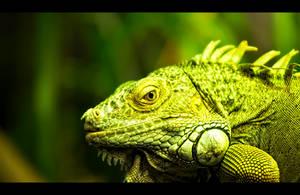 Big Green Iguana by WiDoWm4k3r