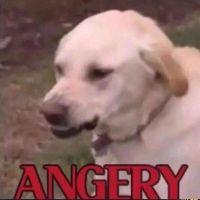 Angery By Finnabun-dabngxk by Colonel-Chicken
