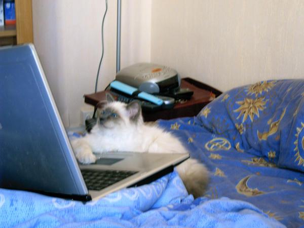 Un chat... Geek_cat_O____o_by_Fura01