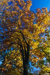 The Orange Tree by N1cn4c