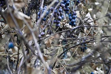 Wine 04 by N1cn4c