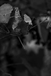 Wine 05 by N1cn4c