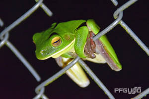Frog On The Wire by pfgun0