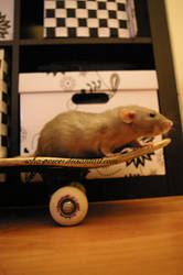 skate rat by soho-power