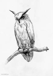 Owl by MackSztaba