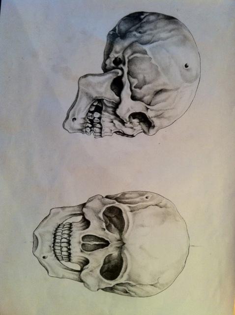 skulls by nsanenl