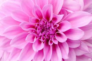 A PINK FLOWER...hmmmm...Must Be Mommas