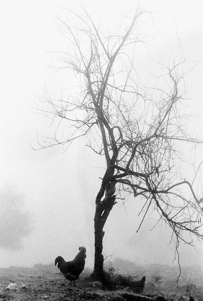 Tree II by ozhernandez