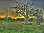HDR, tree in field, sunset