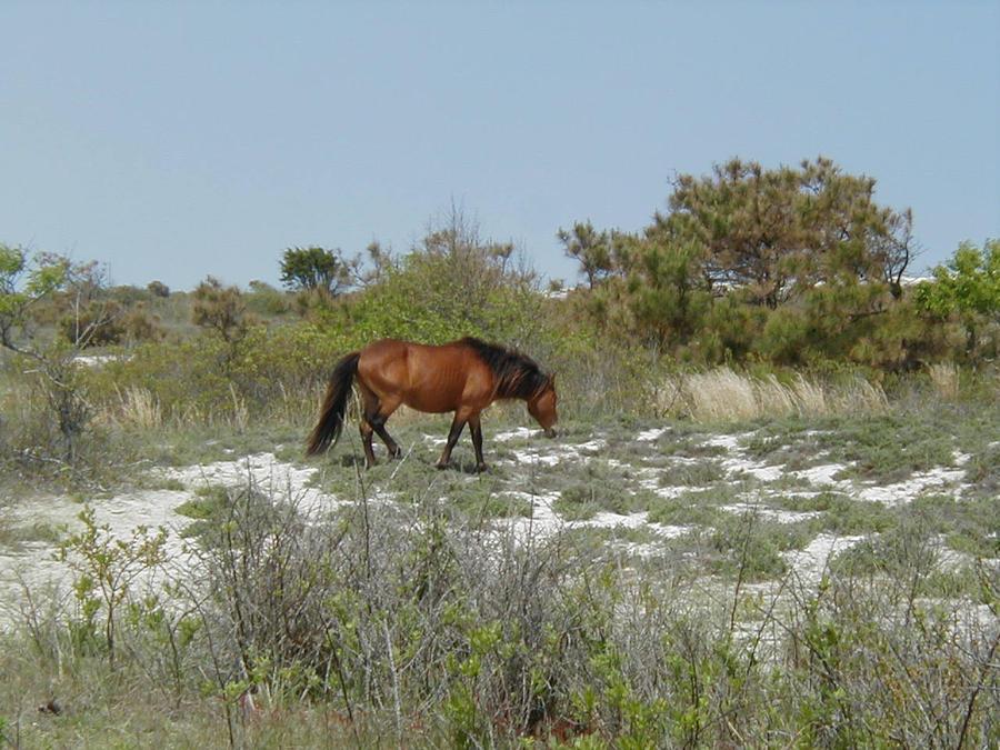 Wild horse on Island