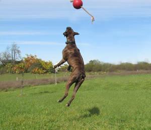 Chakotay, jumping 1
