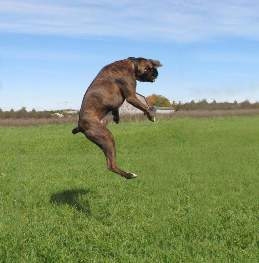 Chakotay, jumping 2 by Lectrichead