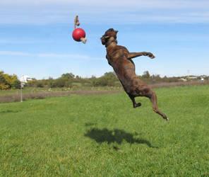 Chakotay, jumping 3