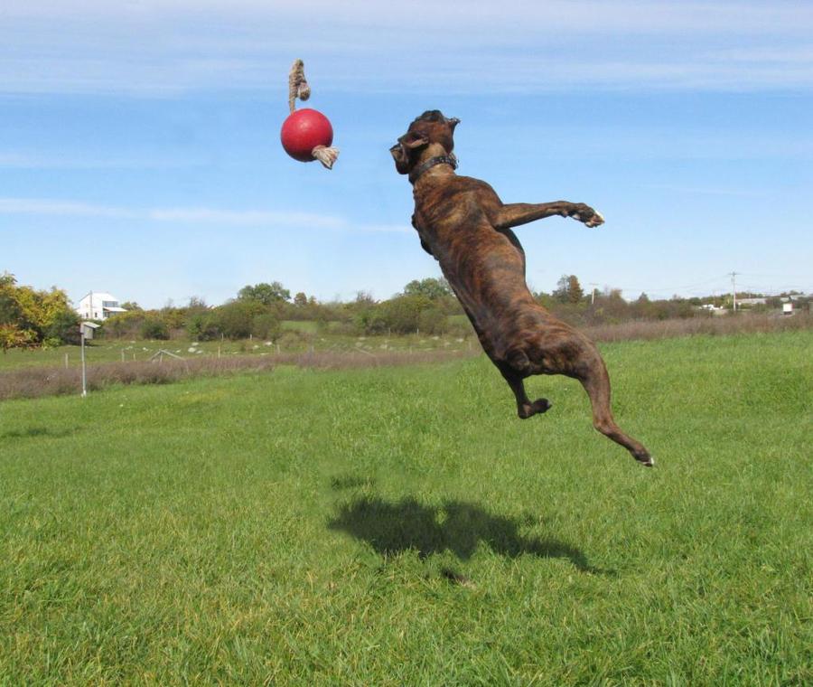 Chakotay, jumping 3 by Lectrichead