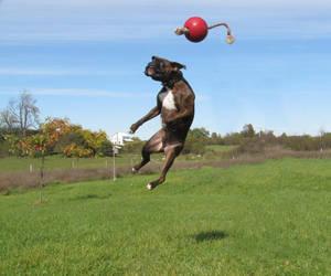 Chakotay, jumping 4