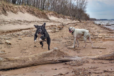SIsko and Archer at Lakeview Beach