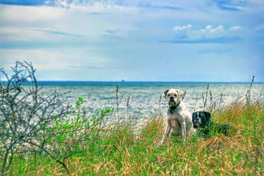Sisko and Archer at Lakeview Beach, NY.  HDR.