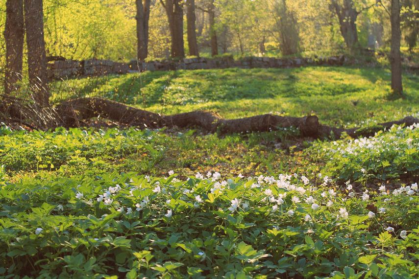 Fairy tale forest II