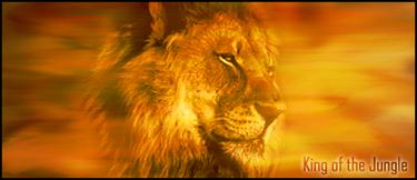 Présentation de Chauve Souris  Lion_Signature_by_GrandmasterX