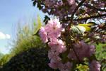 Stock Laura Graph cerisier a fleur