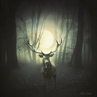 Le cerf by Laura-Graph