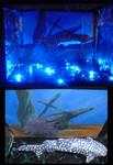 3D.Whale.Shark:Lamp