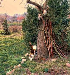 Crazy Springtime by Abrimaal