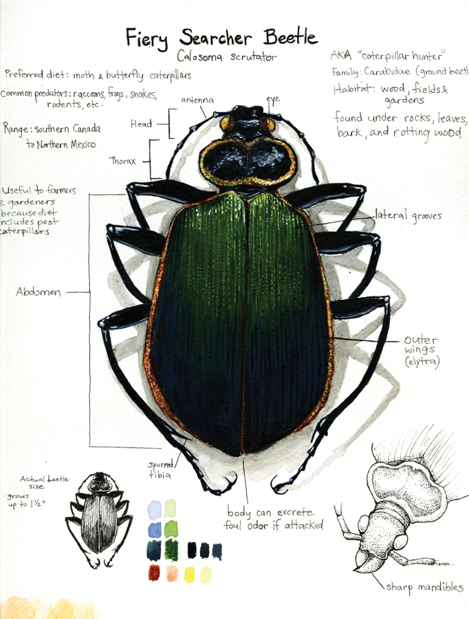 Beetle Study by Deadsound