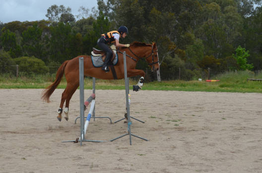 Puzzle Showjumping Stock 6