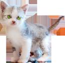 Little-kitten-130px by EXOstock