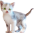 Little kitten 50px by EXOstock