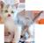 Little kitten 50px