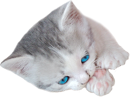 Little kitten2 130px