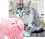 Little kitten with a fur heart 2 150px
