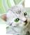 Little kitten 3 50px by EXOstock
