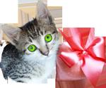Little kitten with a fur heart 3 150px by EXOstock