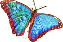Blue butterfly 130px by EXOstock