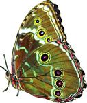 Blue butterfly 5 150px by EXOstock